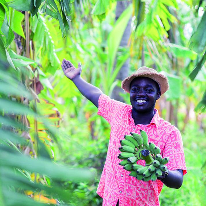 Jeune fermier dans une bananeraie content avec l'épargne projet